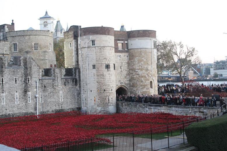 Tour-de-Londres_coquelicots