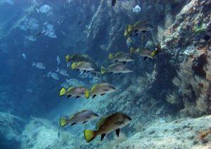 plonge-argeles