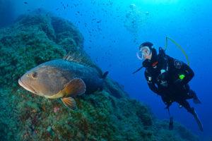 Les 3 plus beaux spots de plongée de Hyères