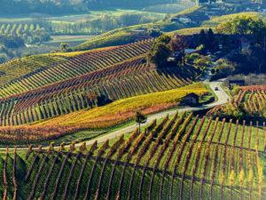 L'œnotourisme : les plus belles routes de vins à découvrir en Europe et en Amérique